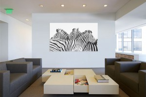 Zebra Bild Büro